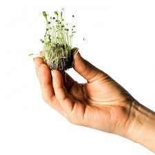 Bombardeo con semillas para reforestar zonas degradadas