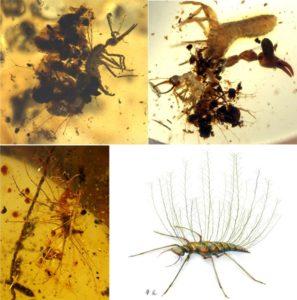 Encuentran insectos camuflados de 100 millones de años