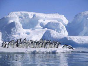 Cambio Climático. Envuelven glaciares  para evitar que se derrita con el aumento de temperaturas.